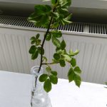 Výstava byliniek a liečivých rastlín