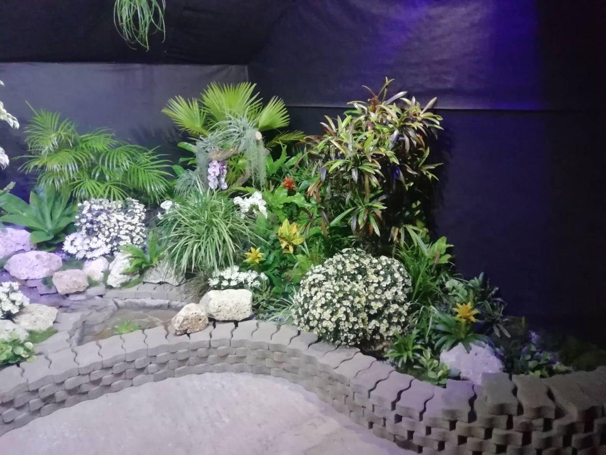 Magické svetielkujúce rastliny