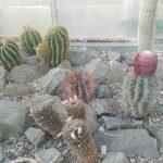 Botanická záhrada Košice - výstava Magické svetielkujúce rastliny
